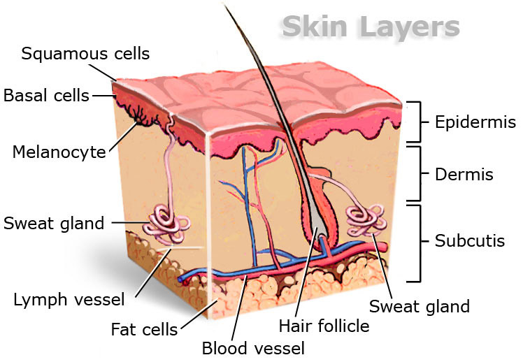 skin_cancer_layers_748