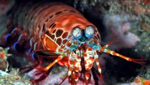 180117_mantisshrimp_1-1259x720