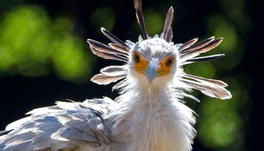 animal-hero-secretarybird