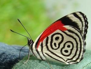 bdbbb6063481708214e0c0bbaf7f4296--butterfly-kisses-the-butterfly