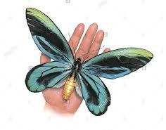 butterfly1 (2)