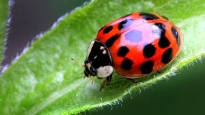ladybug-lookalike-moving-home
