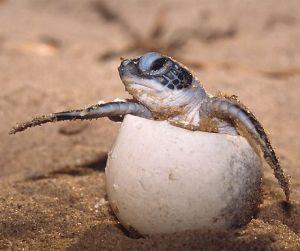 turtle.jpg.optimal