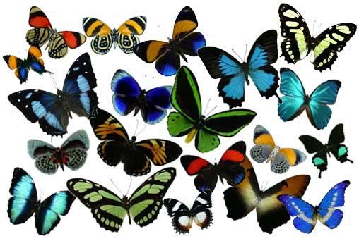 various-butterflies