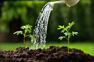 watering-plants-2