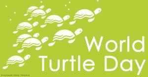 World-Turtle-Day-2017