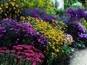 Butterfly-Garden-Flowers-Style