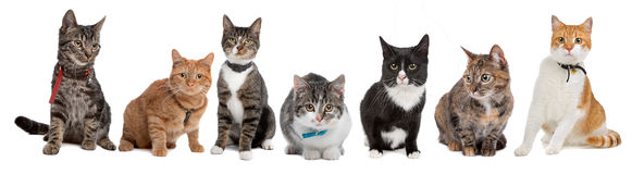 group-cats-17160640