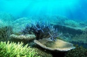 ocean-floor-oceans-31807650-500-333