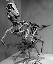 170px-Troodon_Perot_Museum