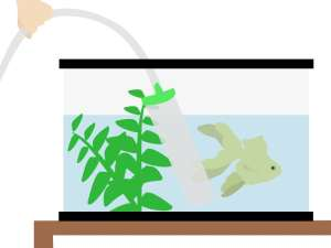 goldfishtankcleaning