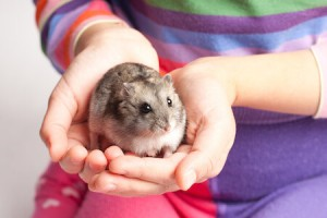 how-to-hold-a-hamster
