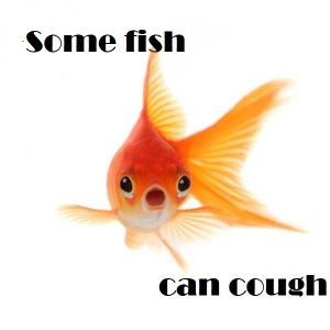 img_caring_for_goldfish_656_600