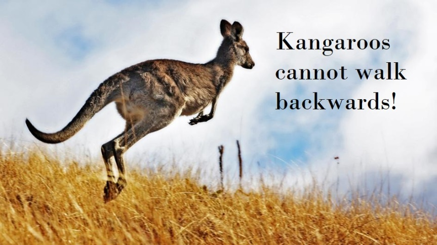 kangaroo-hopping.adapt.945.1