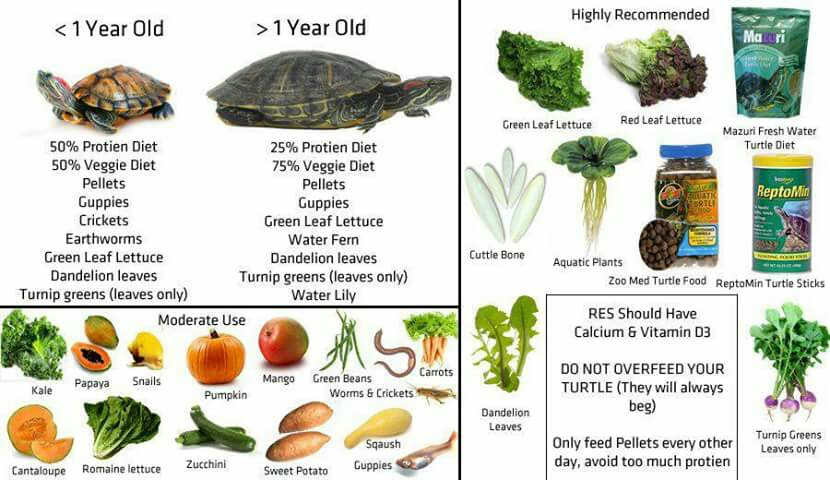 Red-Ear-Slider-Turtle-Food