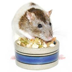 rat_food