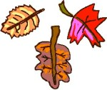 animated-leaf-image-0189
