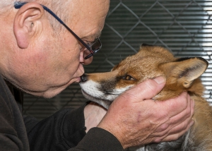 Warwickshire Wildlife Sanctuary, Geoff Grewcock and Raven the rescued fox.