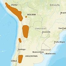 220px-AndeanCat_distribution