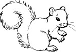 animated-coloring-pages-squirrel-image-0012