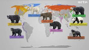 bears world2