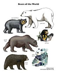 bearsworld