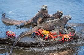 crab3